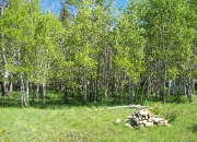 Aspen Stands are FIREWISE